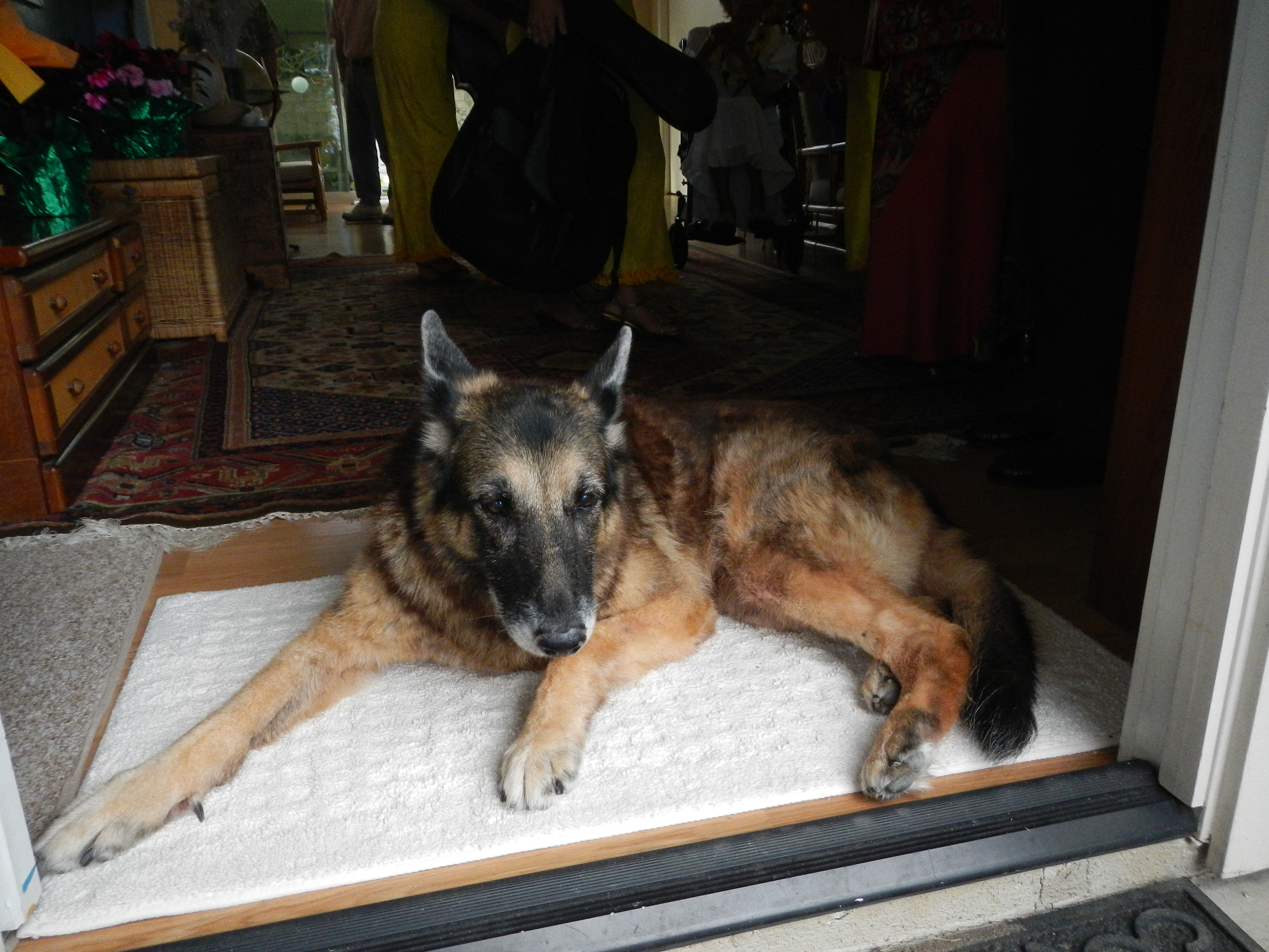 Our dog, Kona, waits at the front door, she knows the guests are about to arrive.