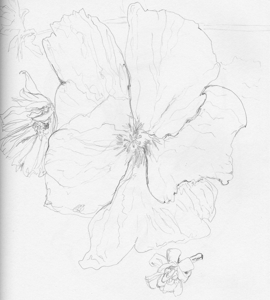 One day I'll be able to capture the delicate quality of the Hibiscus petals.