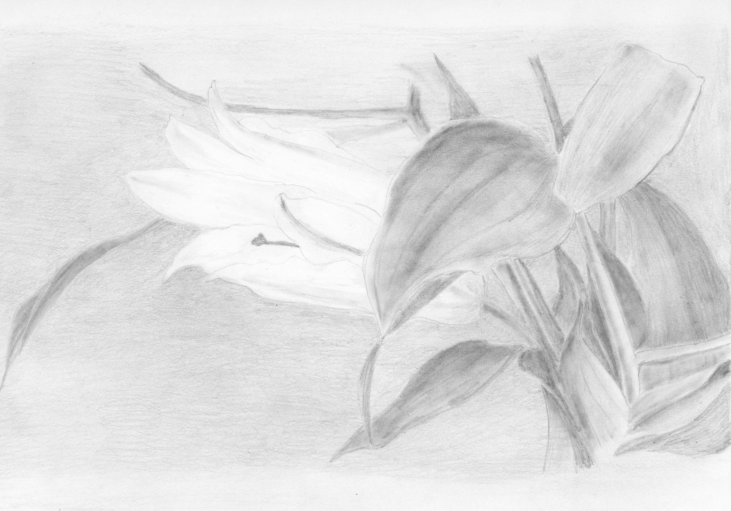 lilly study gray